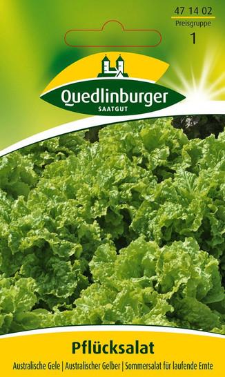Pflücksalat Australische Gele | Salatsamen von Quedlinburger