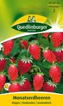 Obstsamen - Monatserdbeere Rügen von Quedlinburger Saatgut