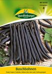 Buschbohne Purple Teepee | Buschbohnensamen von Quedlinburger