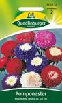 Pomponaster Mischung von Quedlinburger Saatgut