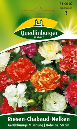 Chabaudnelke Riesen Mischung von Quedlinburger Saatgut