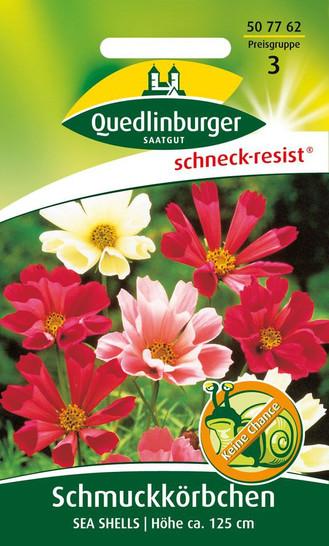 Schmuckkörbchen Sea Shells | Cosmeasamen von Quedlinburger