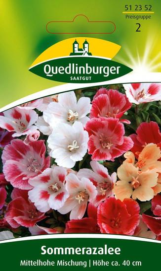 Sommerazalee Mittelhohe Mischung von Quedlinburger Saatgut [MHD 01/2020]