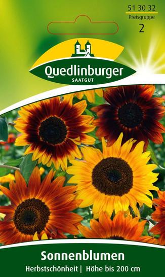 Sonnenblume Herbstschönheit von Quedlinburger Saatgut