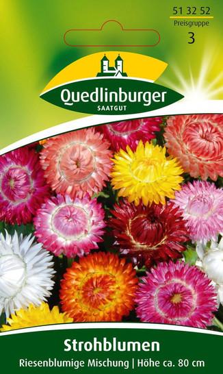 Strohblume Riesenblumige Mischung von Quedlinburger Saatgut