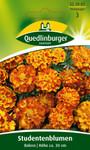 Studentenblume Bolero von Quedlinburger Saatgut