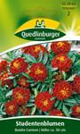 Studentenblume Bonita Carmen von Quedlinburger Saatgut