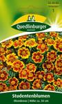 Studentenblume Ehrenkreuz von Quedlinburger Saatgut