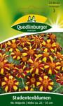 Studentenblume Mr. Majestic von Quedlinburger Saatgut [MHD 01/2020]