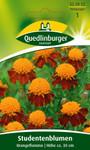 Studentenblume Orangeflamme von Quedlinburger Saatgut