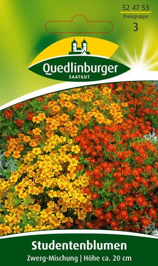Studentenblume Zwerg-Mischung von Quedlinburger Saatgut