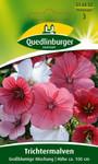 Trichtermalve Großblumige Mischung von Quedlinburger Saatgut
