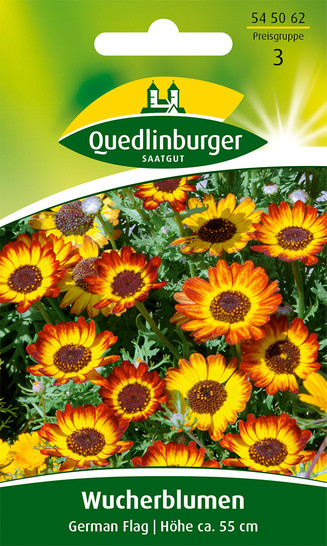 Wucherblume German Flag von Quedlinburger Saatgut