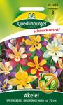 Akelei Spezialrasse Mischung von Quedlinburger Saatgut