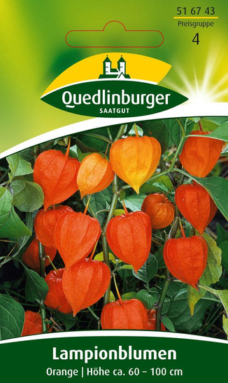 Lampionblume Orange von Quedlinburger Saatgut