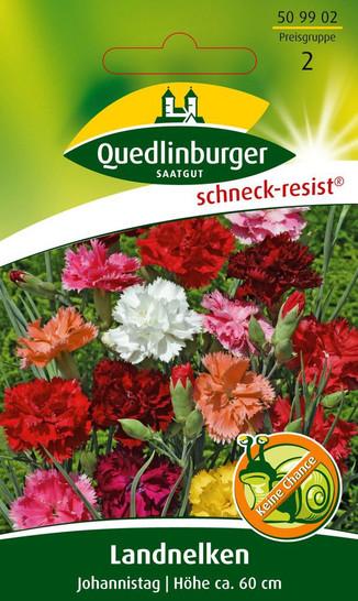 Landnelke Johannistag von Quedlinburger Saatgut