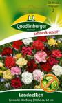 Landnelke Grenadin Mischung | Landnelkensamen von Quedlinburger