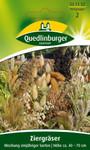 Ziergräser Einjährige Mischung | Gräsersamen von Quedlinburger