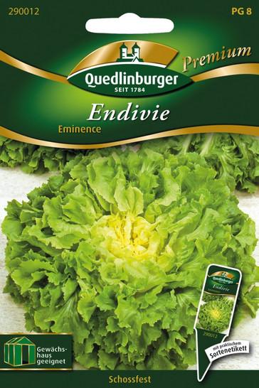 Endivie Eminence von Quedlinburger Saatgut
