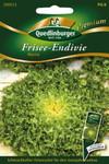 Friseeendivie Myrna von Quedlinburger Saatgut