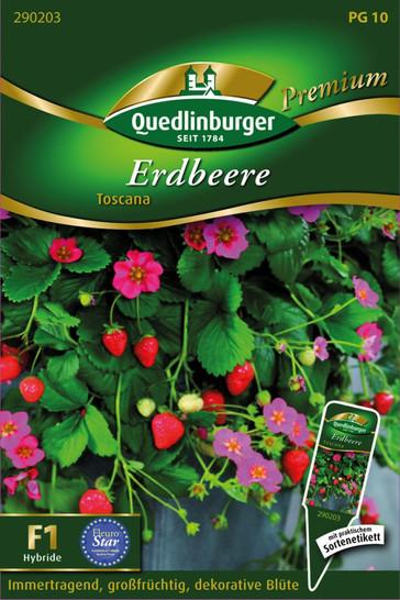 Erdbeere Toscana | Erdbeerensamen von Quedlinburger