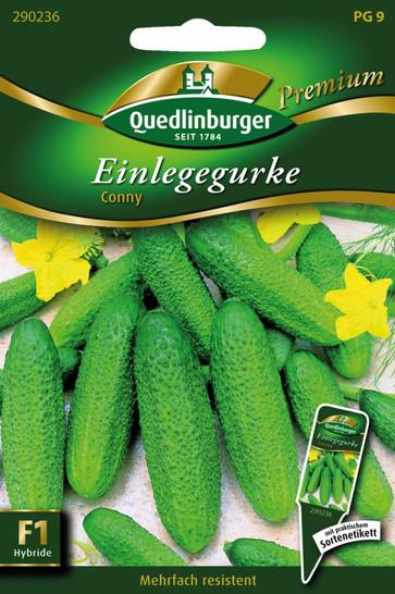 Einlegegurken Conny von Quedlinburger Saatgut