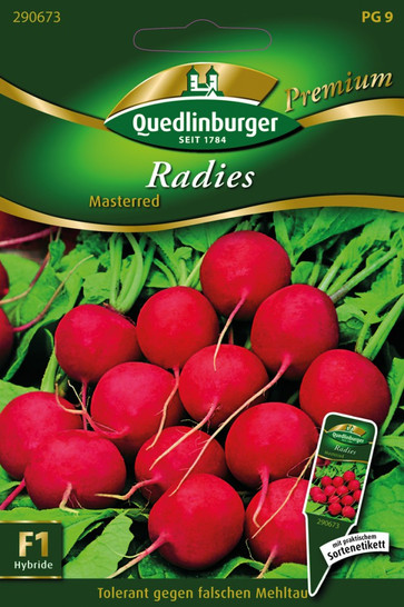Radies Masterred von Quedlinburger Saatgut