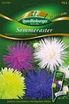 Sommerastern Riesen Strahlen von Quedlinburger Saatgut [MHD 01/2020]
