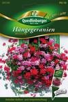 Hängegeranien Mischung | Hängegeraniensamen von Quedlinburger