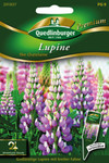 Lupine The Chatelaine von Quedlinburger Saatgut