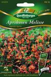 Aprikosen Melisse von Quedlinburger Saatgut