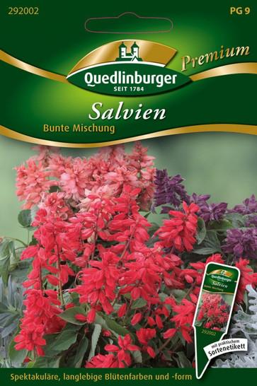 Salvien Bunte Mischung   Salviensamen von Quedlinburger
