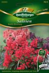 Salvien Bunte Mischung von Quedlinburger Saatgut