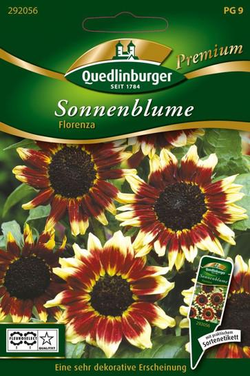 Sonnenblumen Florenza von Quedlinburger Saatgut