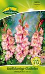 Großblättrige Gladiole Priscilla (10 Stück) | Gladiolenzwiebeln von Quedlinburger