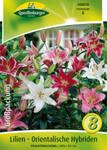 Orientalische Lilie Mischung | Lilienzwiebeln von Quedlinburger