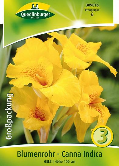 Canna Indica gelb (3 Stück)  | Cannazwiebeln von Quedlinburger