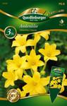 Andenlilie | Lilienzwiebeln von Quedlinburger
