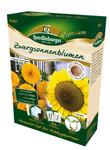 Anzuchtset Zwergsonnenblumen von Quedlinburger Saatgut