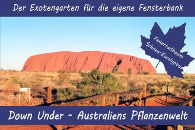 Anzuchtset Australiens Pflanzenwelt | Exotische Samen von Saflax