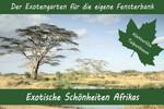 Anzuchtset - Exotische Schönheiten Afrikas von Saflax