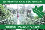 Anzuchtset - Faszination Tropischer Regenwald von Saflax [MHD 09/2018]