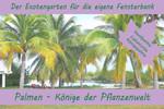 Anzuchtset Palmen-Könige der Pflanzenwelt | Exotische Samen von Saflax