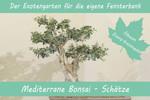 Anzuchtset Mediterrane Bonsai-Schätze | Exotische Samen von Saflax