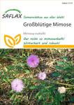 Exotische Samen - Großblütige Mimose von Saflax