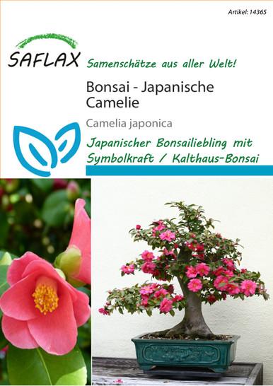 Japanische Camelie | Japanische-Cameliensamen von Saflax