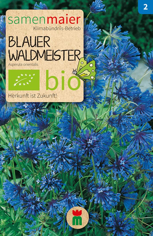 Blauer Waldmeister Saatgut