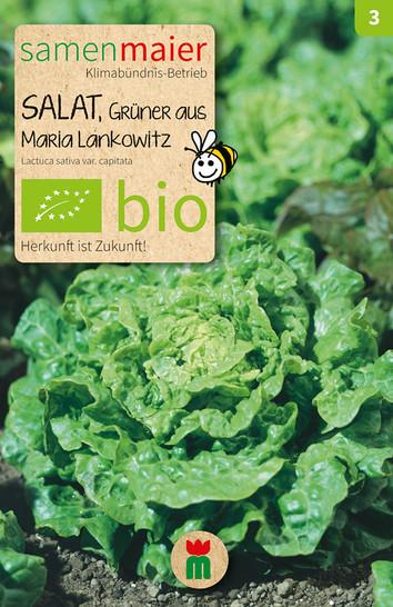 Salat Grüner aus Maria Lankowitz | Bio-Salatsamen von Samen Maier