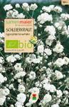 Schleierkraut einfache weiß | Bio-Schleierkrautsamen von Samen Maier
