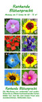 Rankende Blütenpracht | Blumenmischung von Saflax